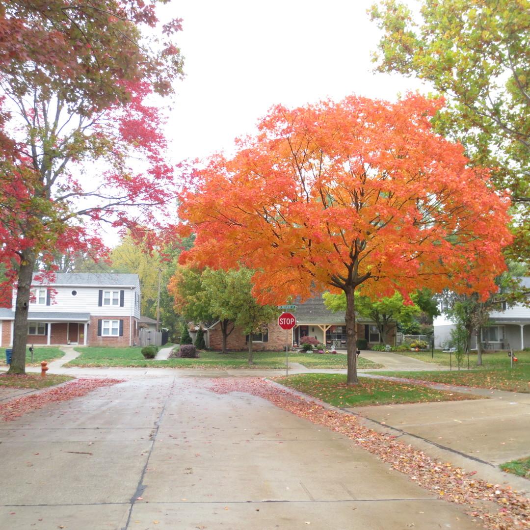 2104 Noel, Champaign, Illinois, 61821